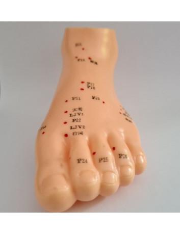 Modello piede