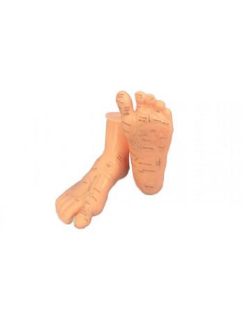 Modello piedi (coppia)