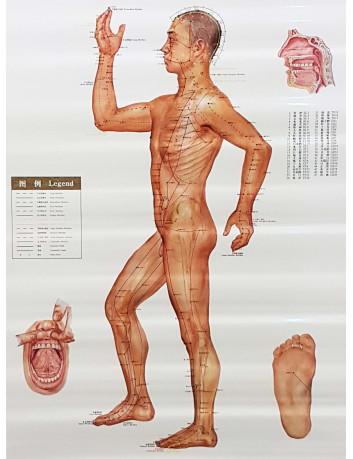 Mappa Corpo Umano