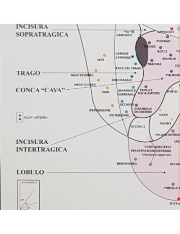 Mappa Auricolare